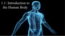 Human Body Student In Class Notes With Blanks Widescreen 2017