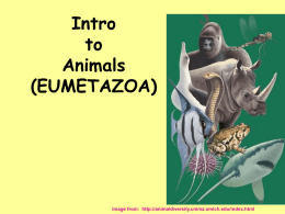 Intro to Animal