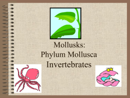 Mollusks - Phillips Scientific Methods