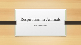 Respiration and Circulation in Animals
