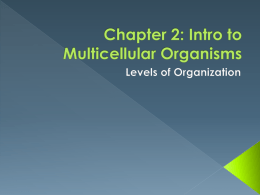 Chapter 2: Intro to Multicellular Organisms
