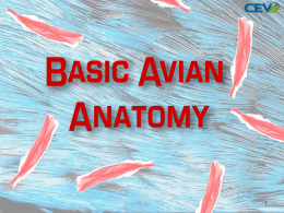 Avian Body Systems