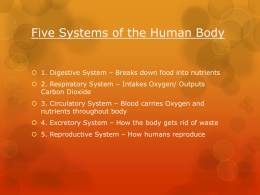 Five Systems of the Human Body