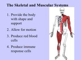 Human Body Systems Tour