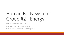 Human Body Systems Group #1