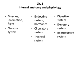 Ch. 3 Internal anatomy and physiology