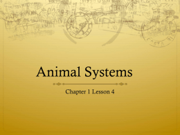 Animal Systems1