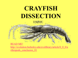CrayfishDisssection