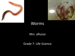 Worms - Mrs. aRusso`s 7th/8th Grade Science Site!