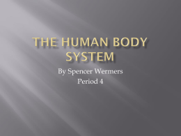 The human body System - local