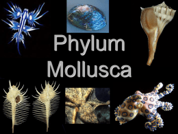 Mollusca - Cobb Learning