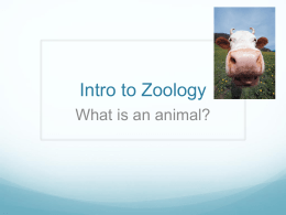 Intro to Animals