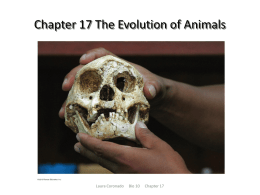 Chapter 17 The Evolution of Animals