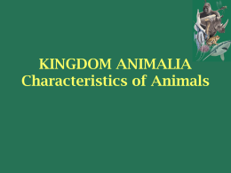 Animal Introduction Powerpoint
