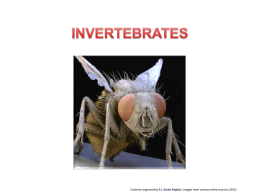 INVERTEBRATES - WordPress.com
