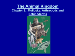 The Animal Kingdom Chapter 2: Mollusks, Arthropods and
