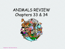 ANIMALS REVIEW Chapters 33 & 34