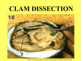 clam dissection ppt