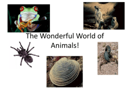 The Wonderful World of Animals!