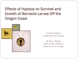 Effects of Hypoxia on Survival and Growth of Barnacle Larvae Off the
