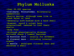 Phylum Molluska - Biology Junction