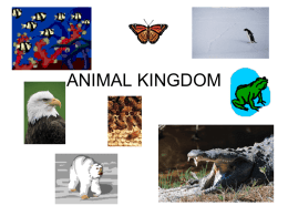 2012ANIMAL-KINGDOM-power-point1