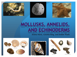 Mollusks, Annelids, and Echinoderms