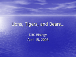 Lions, Tigers, and Bears…