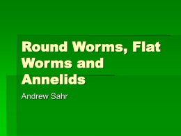 Round Worms, Flat Worms and Annelids