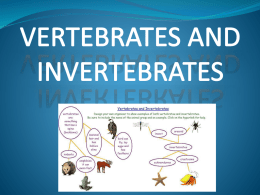 VERTEBRATES AND INVERTEBRATESx