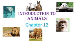 Introduction to Animals - St. Thomas the Apostle School