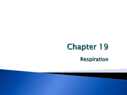 Chapter 19 Respiration